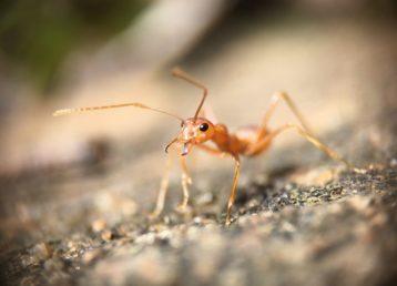 Désinsectisation nuisibles volants guêpes moustiques punaises Prod'hyg 38