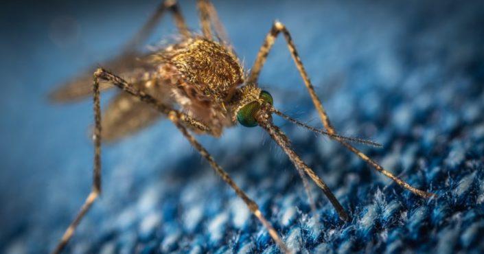 Prodhyg 38 traitement moustiques tigre grenoble isère