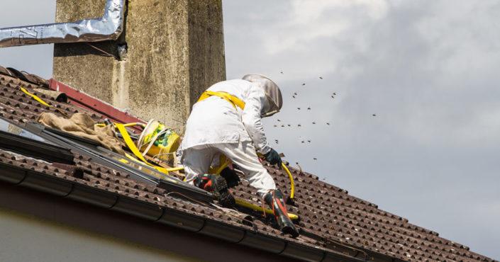 Prodhyg 38 traitement destruction nid de guêpe grenoble isère