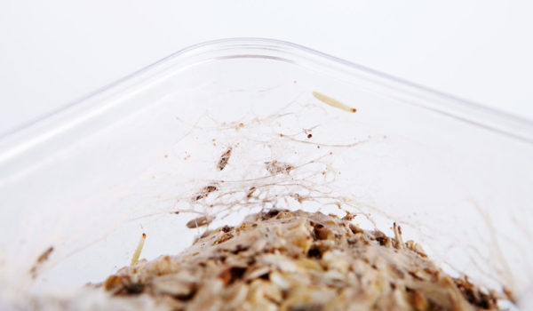 Désinsectisation mites alimentaires Prodhyg Grenoble